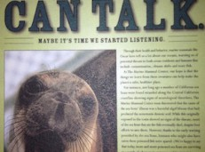 The Marine Mammal Center: Brand Strategy and Execution