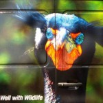 WildCare: Brand Messaging Strategy and Execution
