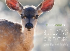 WildCare: Building Our Future Capital Campaign Brochure